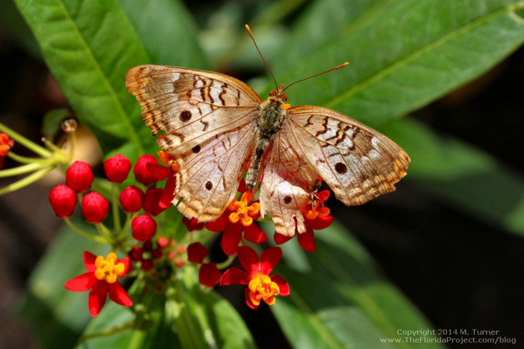 flower-garden-butterfly1a-may14